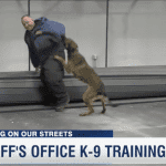 Inside look at Douglas County Sheriff's Department K-9 Unit Training